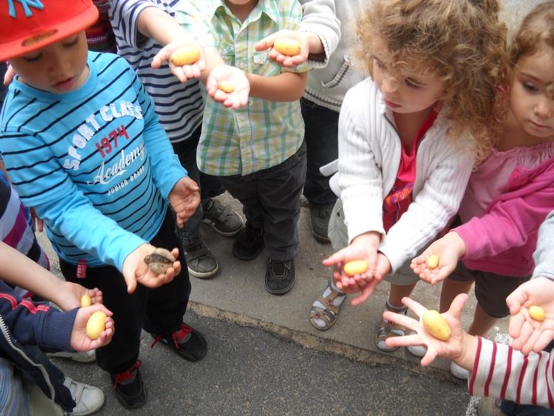 Cole maternelle jeanne lecourt bl r 37 r colte au for Jardin 5 juillet biskra